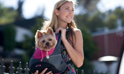 Carrying a Dog in a Backpack