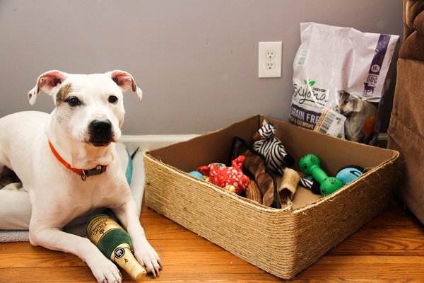 Cleaning dog toys