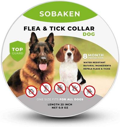 Flea bites dog collar