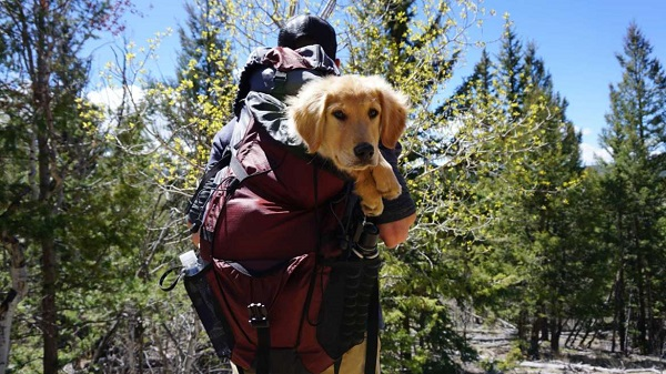 How to Carry a Dog in a Backpack