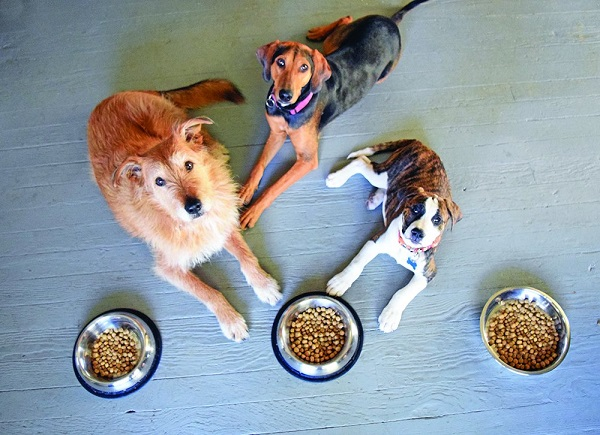 How to Keep Ants Out of Dog Food Bowl