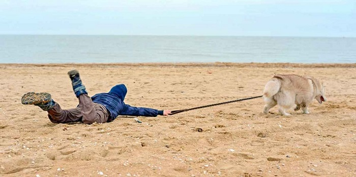 How to Stop Dog from Pulling on a Leash
