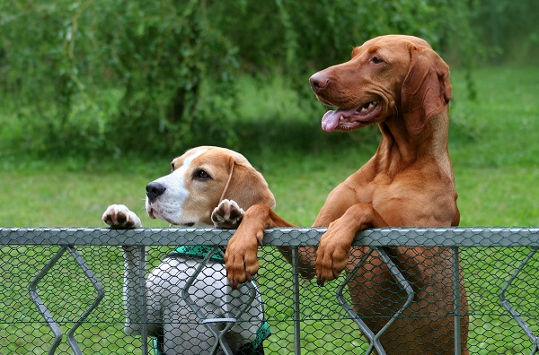 How to keep dogs from jumping fence