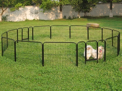 Keep dog away from fence