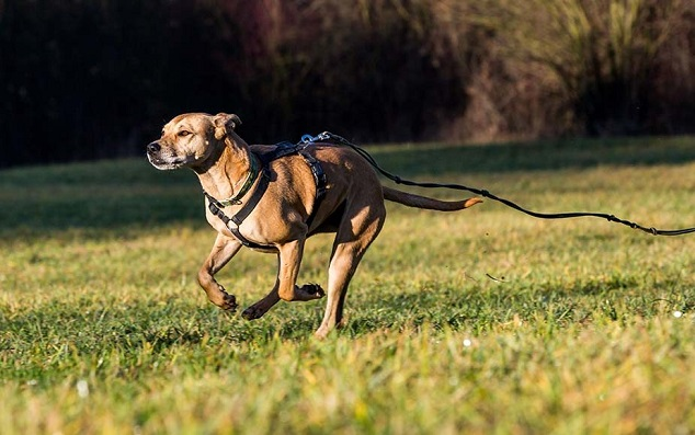 Least Effective Method to Retrieve Off-Leashed Dog