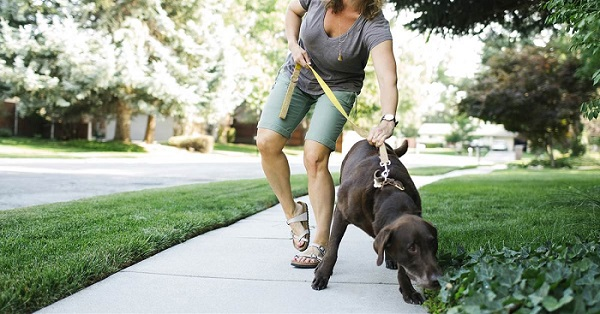 Walking dog with Leash Beside You