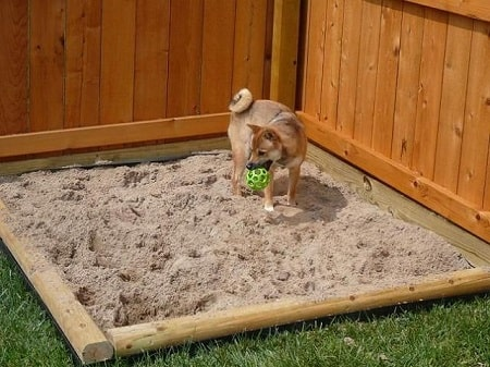 acceptable dog digging area for your dog