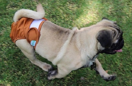 diy dog diaper from men's brief