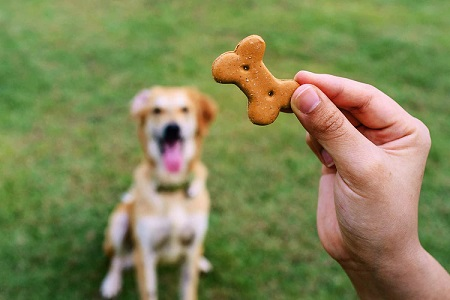 how to give your puppy his pill