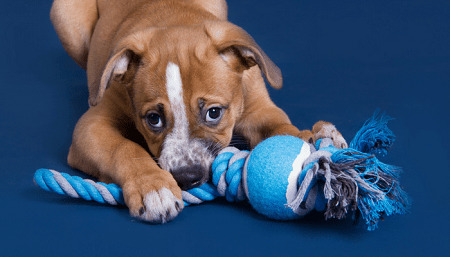 how to make dog rope toys