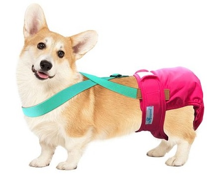keep dog diapers from falling