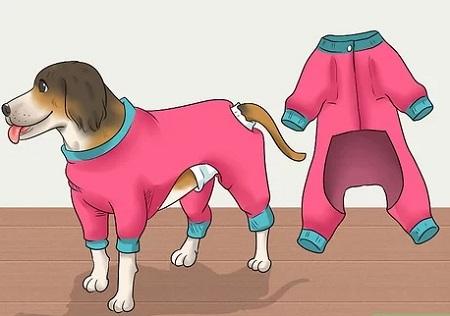 keep-dog-diapers-using-onesie