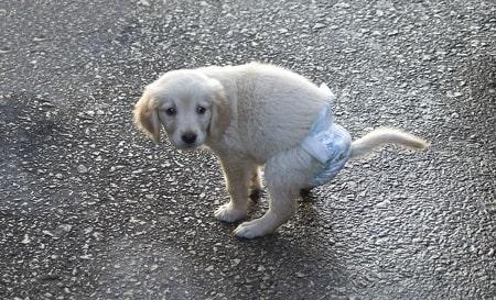 make dog diaper using baby diapers