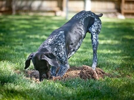 stop dog from hole digging