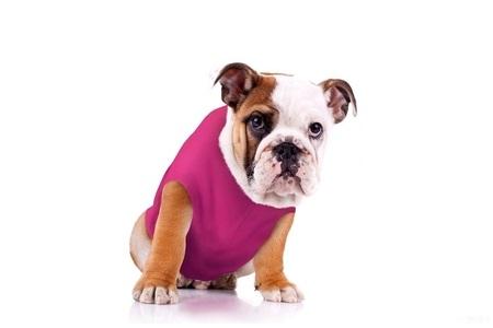 tshirt dog diaper at home