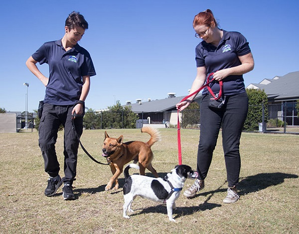 How to Train Your Rescue Dog Tips by Experts