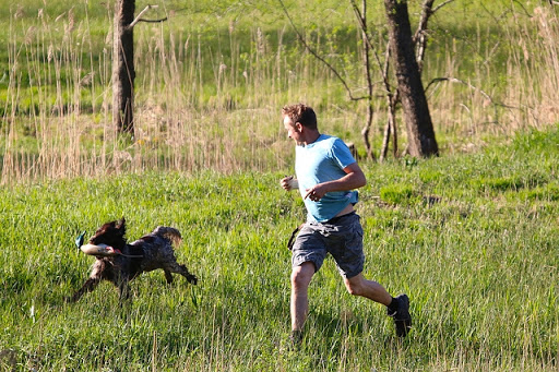Things to avoid when your dog has got off-leash