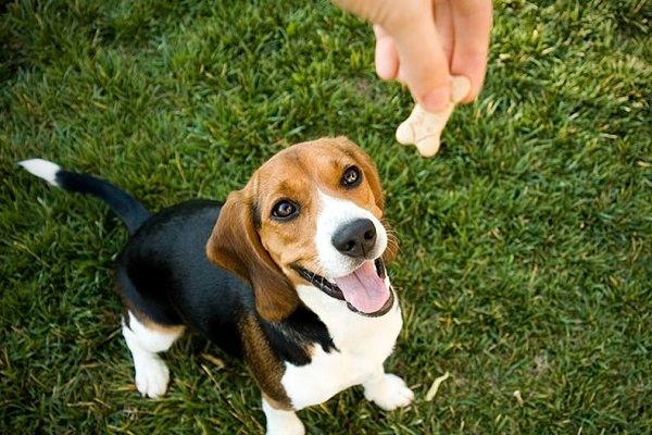 Tips and Tricks from Experts to Train your Rescue dog