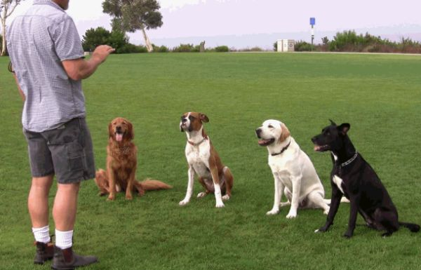 Tips from experts on how to train your rescue dog