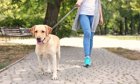 proper way to hold a dog leash
